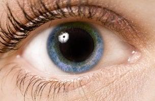Pupill
