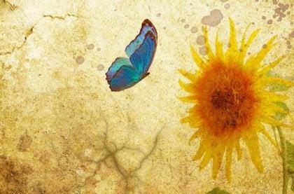 Fjäril och solros