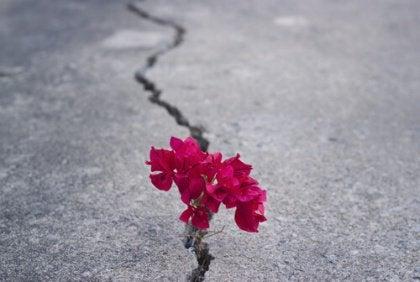 Blomma i gatspricka