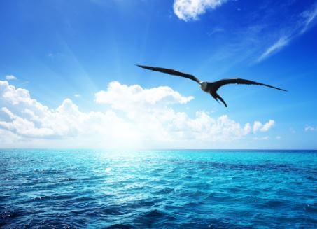 Dröm, och lyft dig till högre höjder