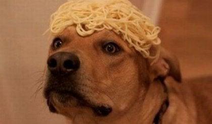 Hund med spaghetti