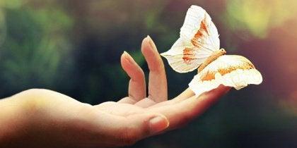 Fjäril i handen