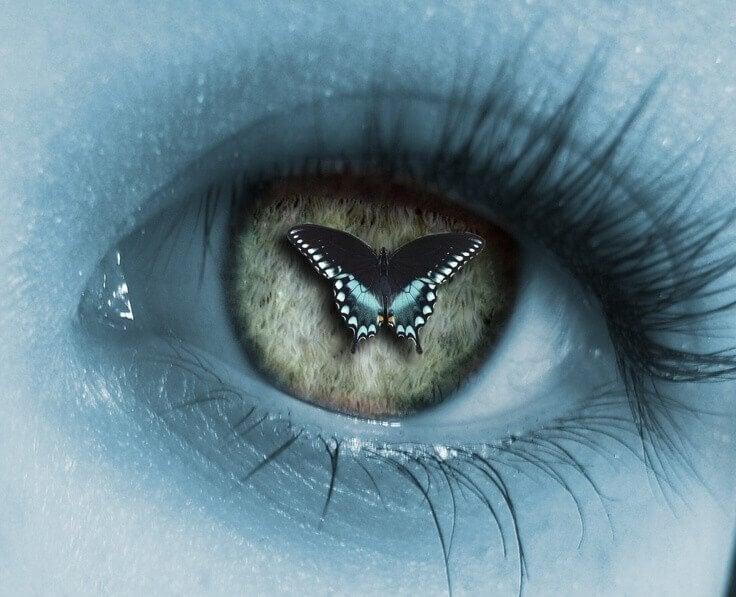 Fjäril i öga