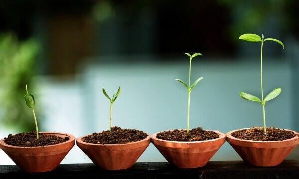 8 tecken på emotionell tillväxt