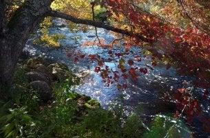 Träd över flod