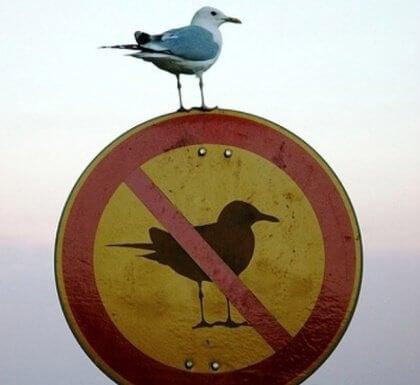 Fågel på skylt