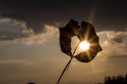 Hjärtformat löv