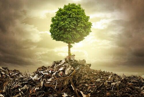 Träd på soptipp