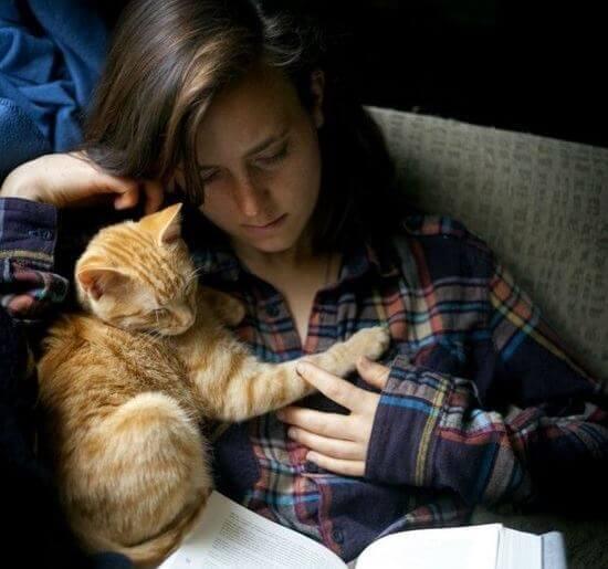 Gosar med katt