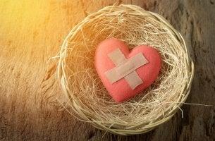 Hjärta i fågelbo
