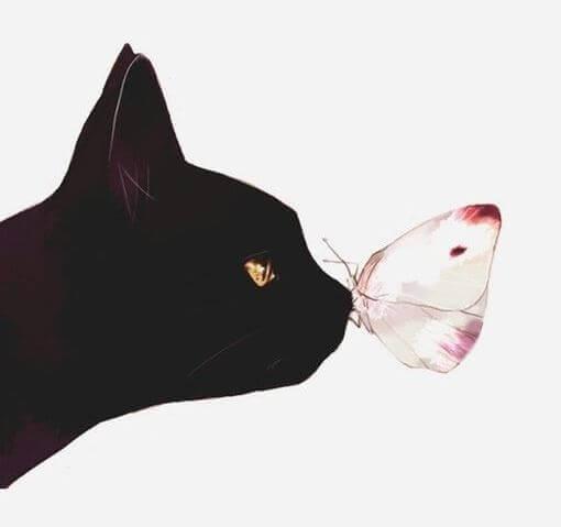 Katt och fjäril