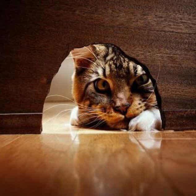 Nyfikenhet dödade inte katten, den gjorde honom starkare