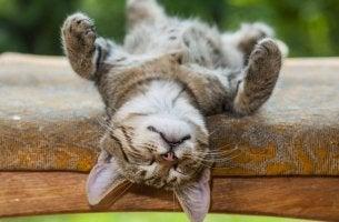 Katt som tar en tupplur