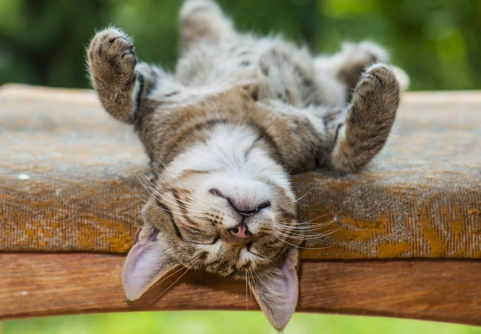 4 psykologiska fördelar med tupplurar