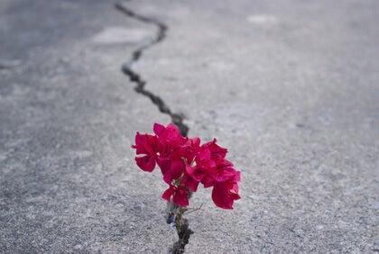 Blomma i asfaltsspricka