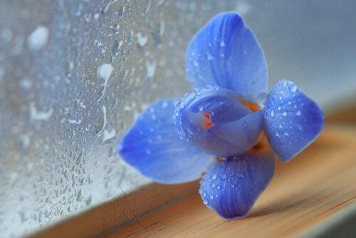 Blomma vid fönster