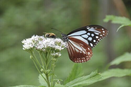 Flyg som en fjäril, stick som ett bi