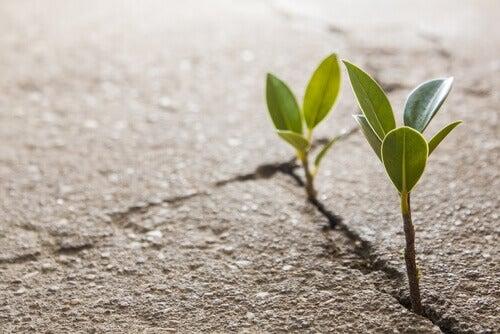 Växande plantor
