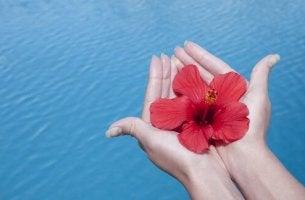 Blomma över vatten