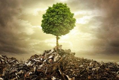 Träd bland bråte