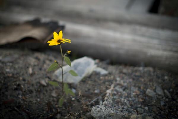 Färgglad blomma