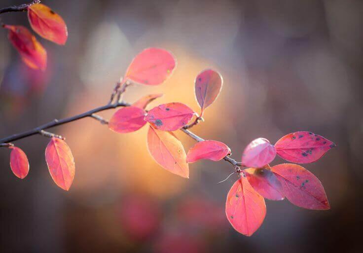 Gren på hösten