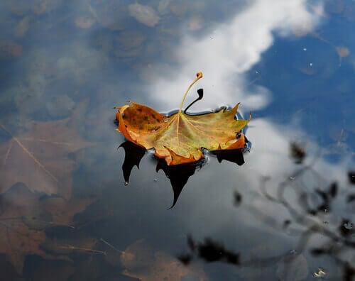 Lär dig av hösten för att släppa dina sorger