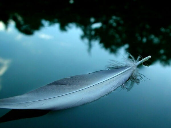 Fjäder på vatten