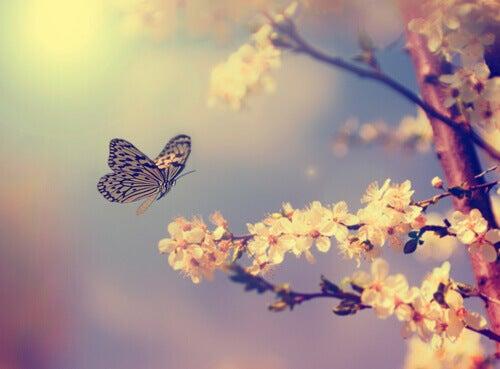 Fjäril vid träd