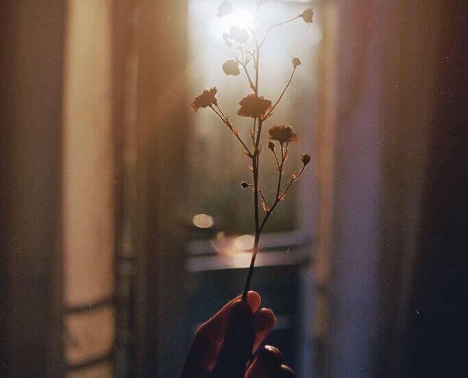 Hand håller blomma
