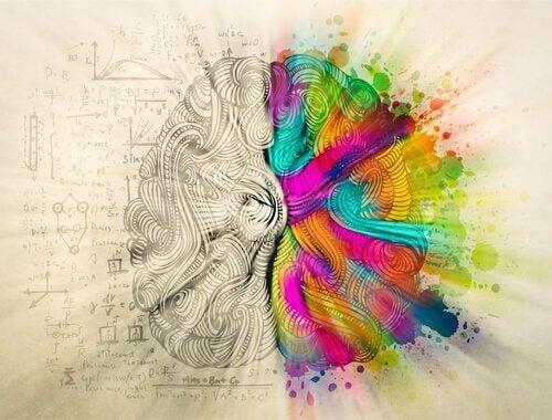 Hjärnans halvor