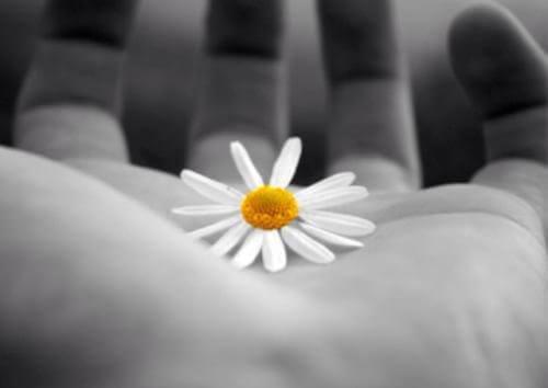 Blomma i hand