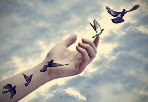Fåglar från arm