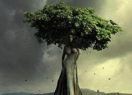 Träd format som kvinna