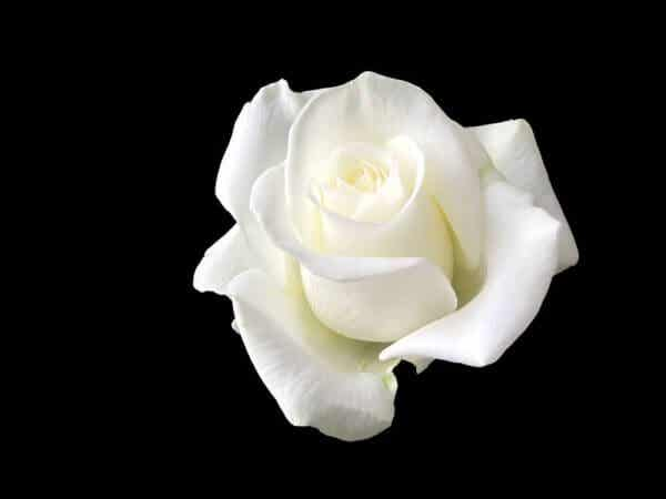 Sophie Scholl: kvinnan som trotsade Hitler med en vit ros
