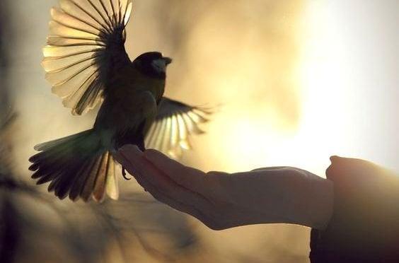 Fågel i hand