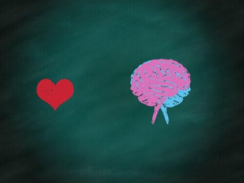 Hjärna eller hjärta