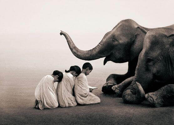 Barn bugar för elefant