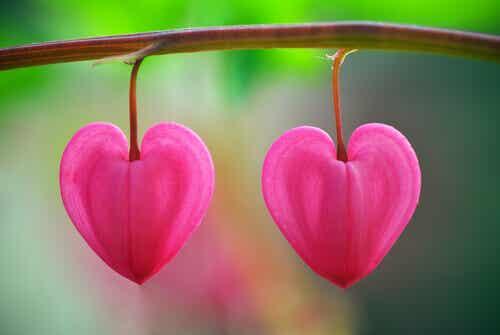 Blommor i öknen: en lektion i att känna igen kärlek