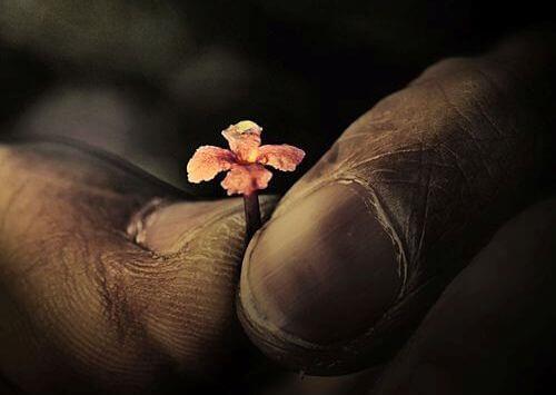 Liten blomma mellan fingrar