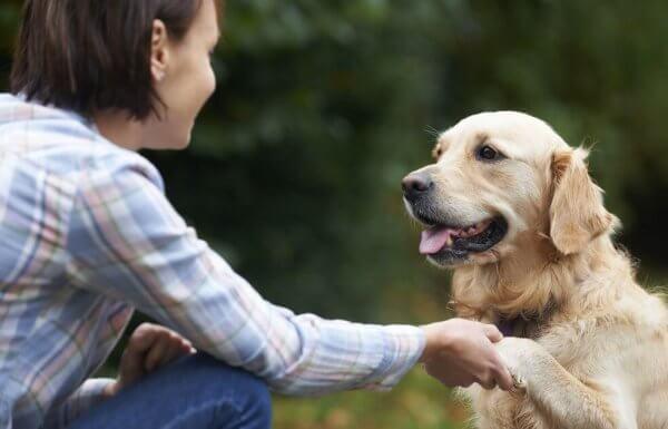Hur känner hundar igen ansikten?