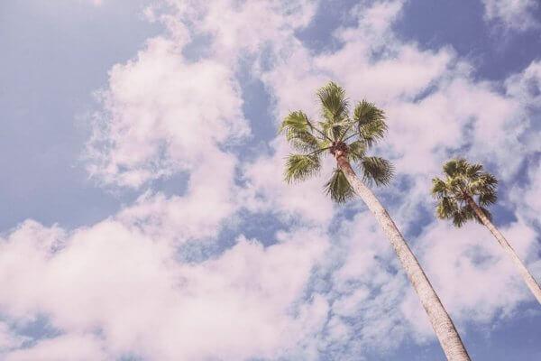 Palm under himmel