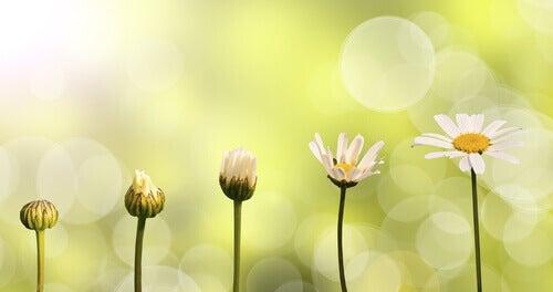 Från knopp till blomma