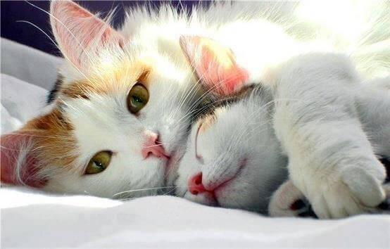 Gosande katter