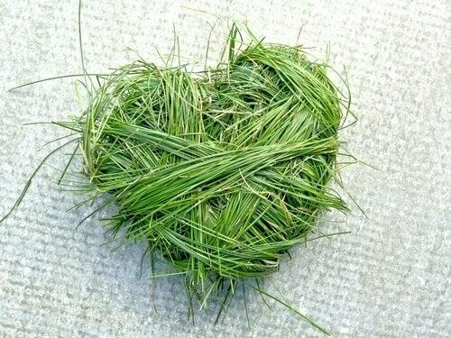 Hjärta av gräs