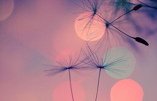 Flygande frön