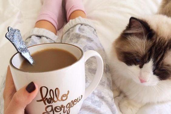 Kaffe och katt