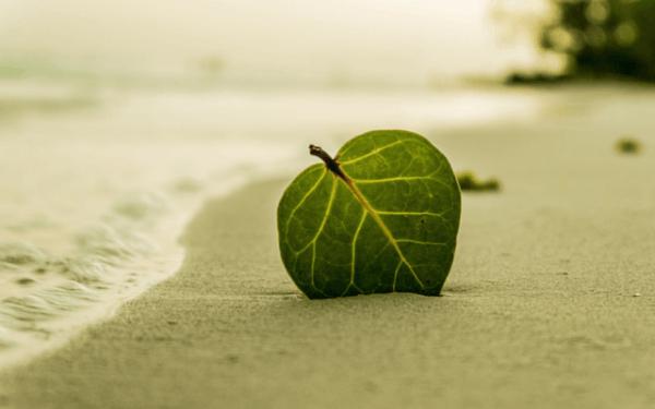 Löv i sanden