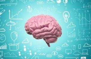 Neuroplasticitet och inlärning