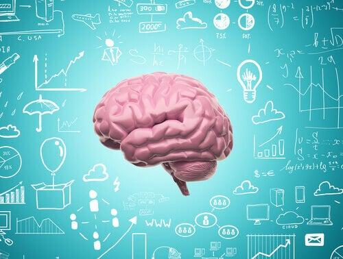 Tack vare neuroplasticitet upphör vi aldrig att lära oss
